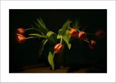 Tulpen Blumenstilleben Kunstdruck Wandbild auf Fine Art Print Papier