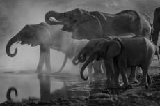 Wandbild Elefanten an der Tränke 50 cm x 75 cm