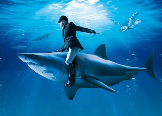 Der Ritt auf dem Hai - Wandbild