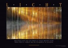 LICHT - Wandbild mit lichtdurchflutetem Wald