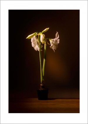 Lilien Blumenstilleben Kunstdruck Wandbild auf Fine Art Print Papier