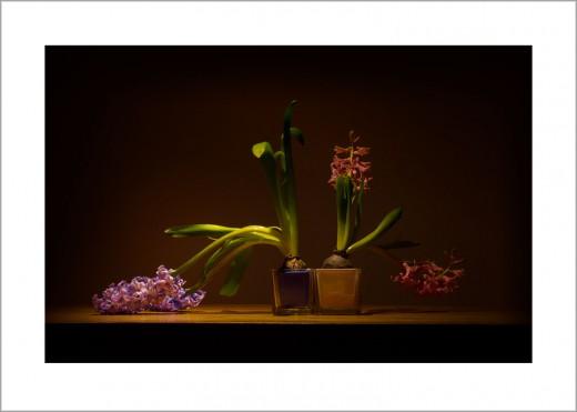 Hyazinthen Blumenstilleben Kunstdruck Wandbild auf Fine Art Print Papier