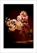 Apfelblüte (Nr.: 2) Blumenstilleben Kunstdruck Wandbild auf Fine Art Print Papier-Copy