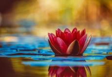 Blumenbild Wasserlilie dekoratives Leinwandbild